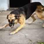 Reportan primer caso de rabia  canina después de tres años en el Beni