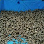 Anuncian la liberación de 80.000 tortugas